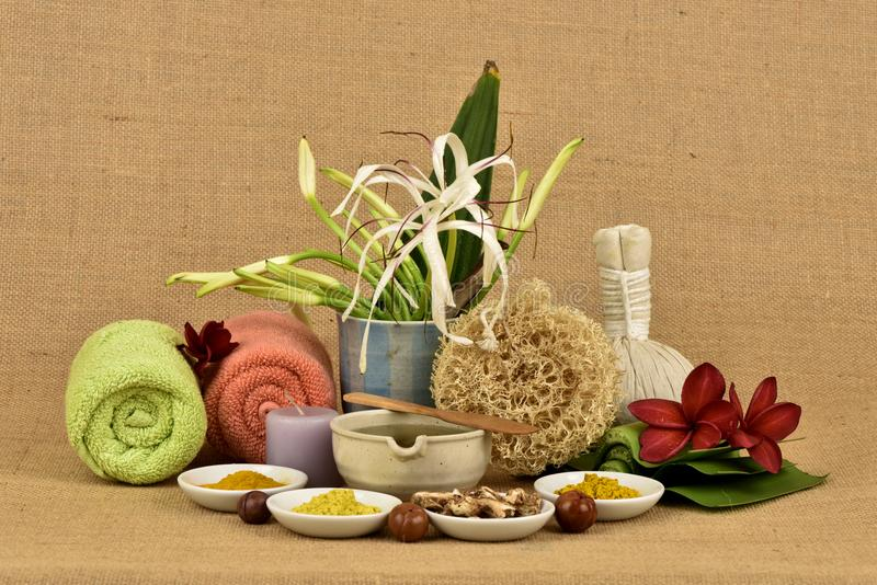 Il giglio, i fiori e le erbe di Crinum hanno proprietà medicinali fotografie stock