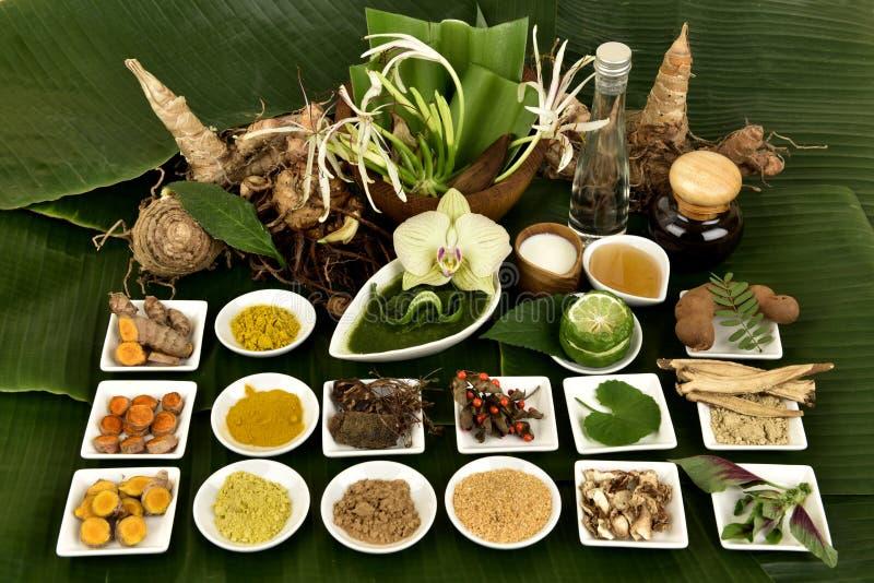Il giglio, i fiori e le erbe di Crinum hanno proprietà medicinali immagine stock libera da diritti
