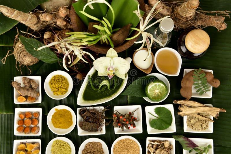 Il giglio, i fiori e le erbe di Crinum hanno proprietà medicinali immagini stock libere da diritti