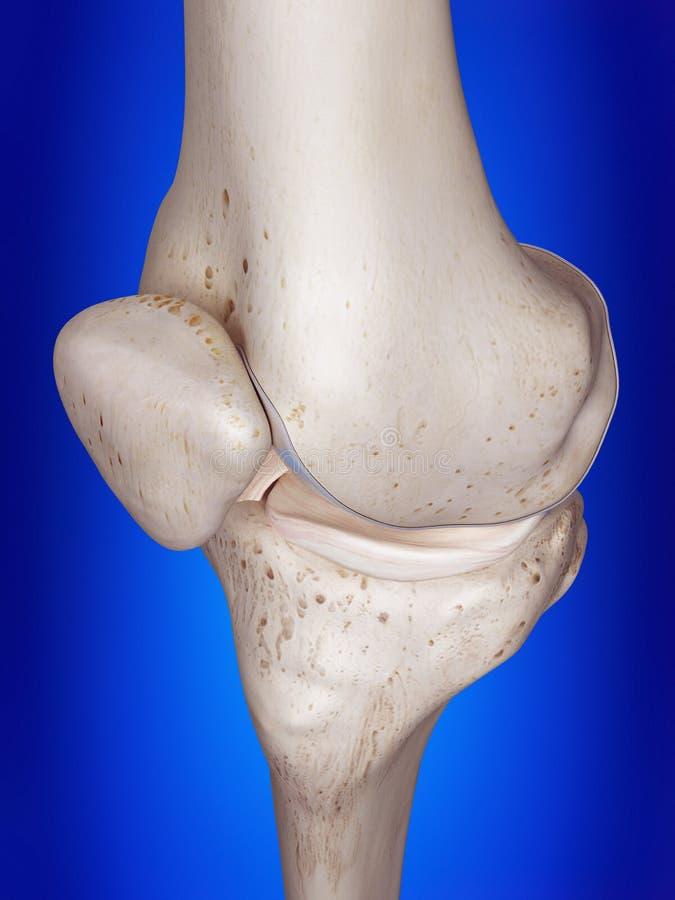 Il ginocchio illustrazione di stock