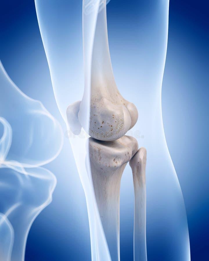 Il ginocchio illustrazione vettoriale
