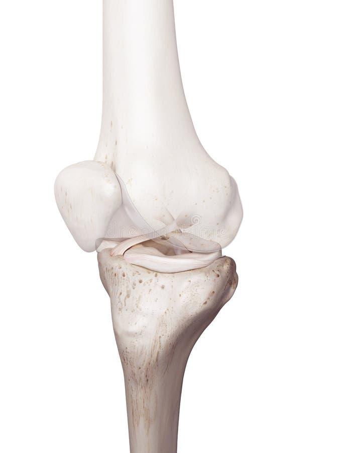 Il ginocchio umano royalty illustrazione gratis