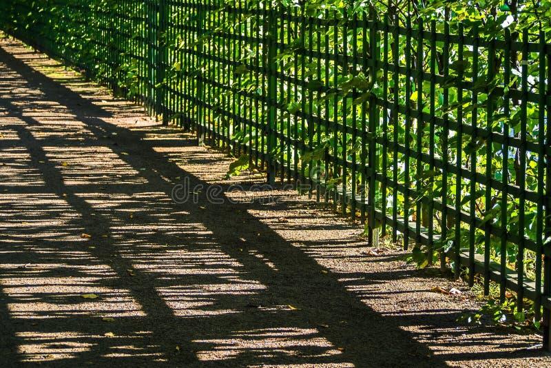 Il gioco di luce e di ombra nei vicoli del giardino di estate fotografie stock libere da diritti