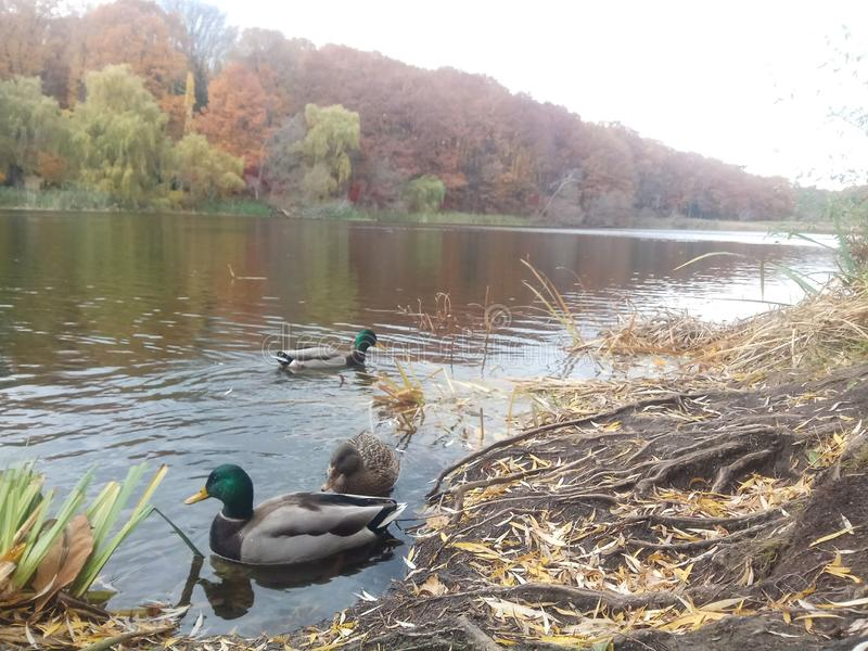 Il giorno dell'autunno nel parco immagini stock
