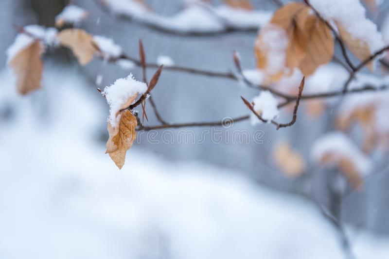 Il giorno nevoso ed i fiocchi di neve dell'inverno coprono una foglia fotografia stock