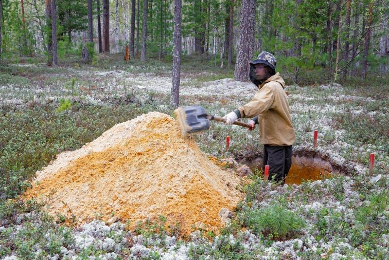 Il giovane archeologo fa gli scavi immagini stock libere da diritti