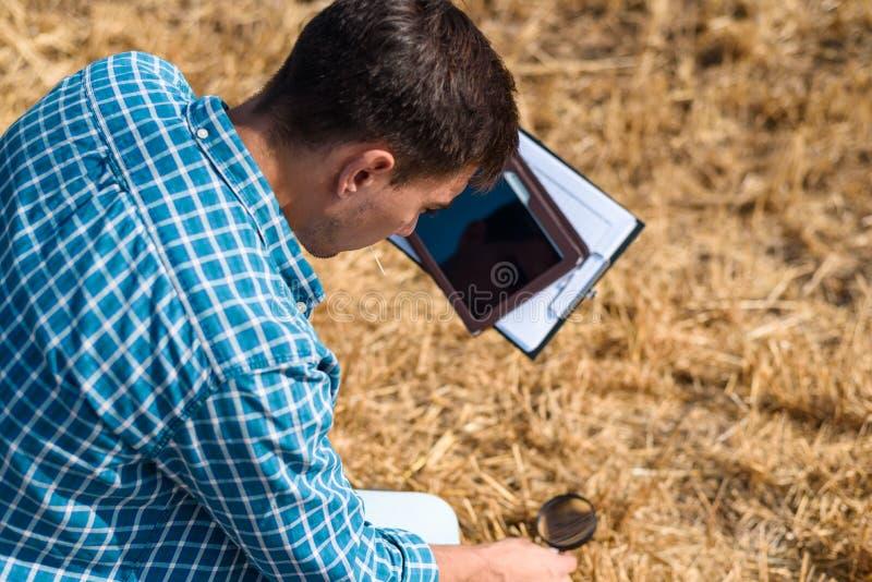 Il giovane botanico maschio dell'agronomo dell'agricoltore studia il fieno falciato con una lente d'ingrandimento e una compressa immagini stock libere da diritti