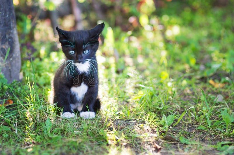 Il giovane gattino immagine stock