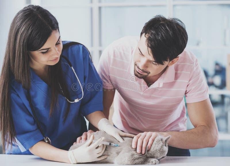 Il giovane tipo ha portato il gatto piacevole per la visita al giovane veterinario fotografia stock