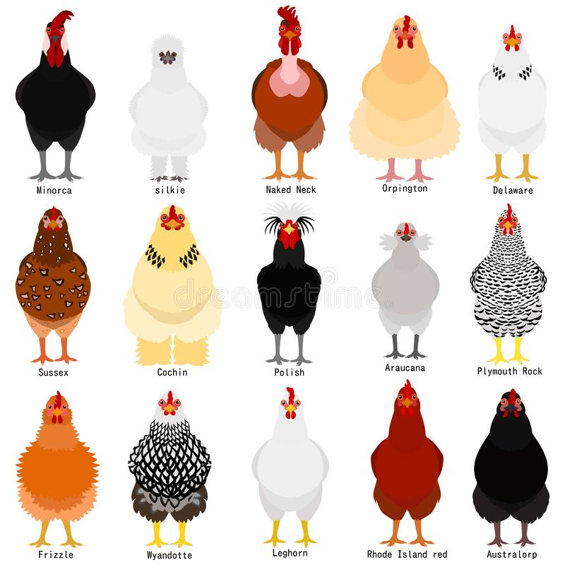 Il grafico del pollo con le razze nomina royalty illustrazione gratis