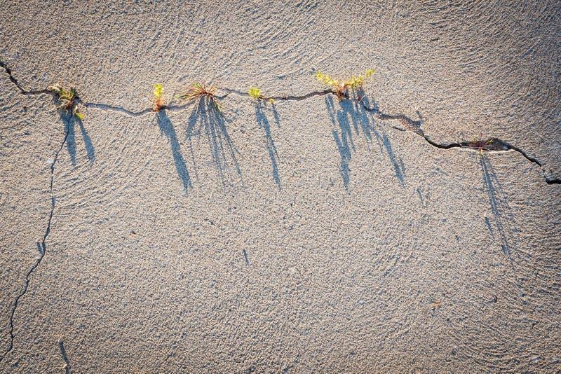 Il grafico ha fatto da una crepa in sabbia asciutta fotografia stock