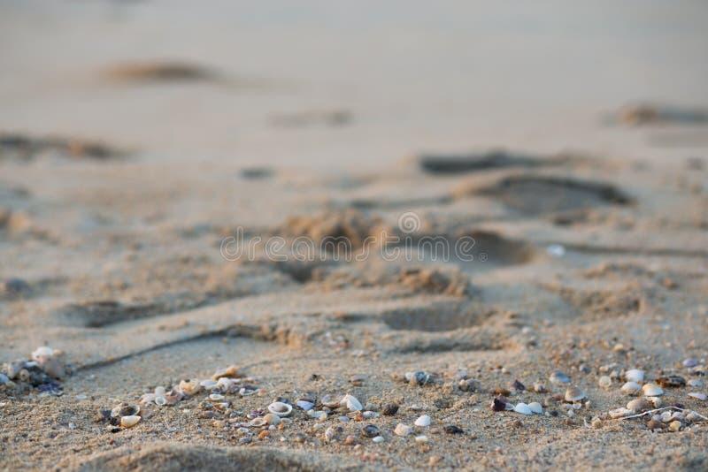 Il granchio di soldato esce dalle coperture, lungo i precedenti della spiaggia immagini stock