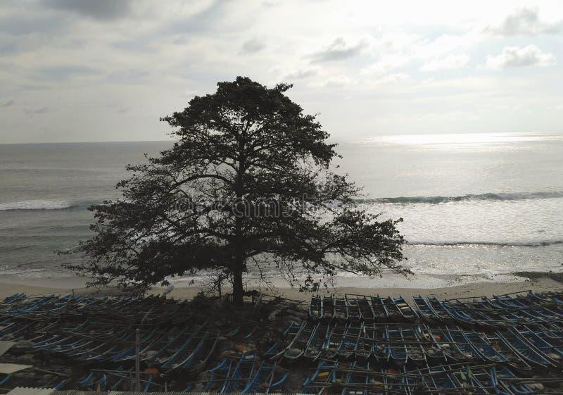 Il grande albero con molti spedisce fotografia stock