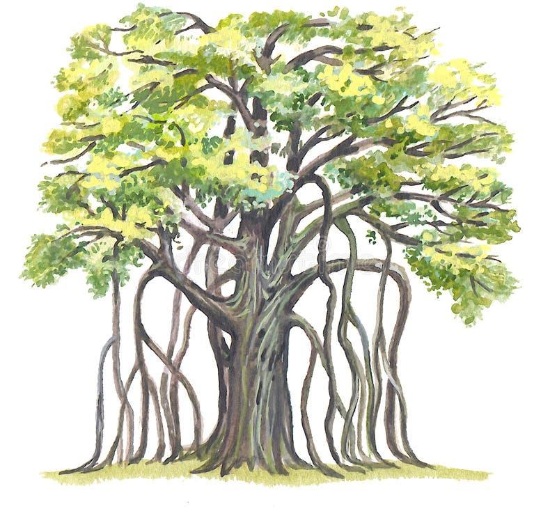 Il grande Banyan (benghalensis del Ficus) illustrazione vettoriale
