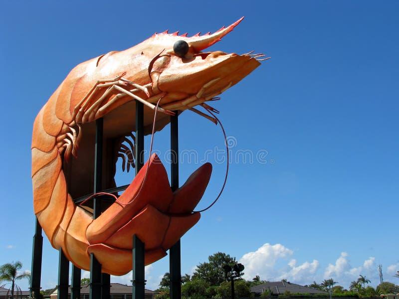 Il grande gamberetto, Ballina NSW, Australia fotografia stock libera da diritti