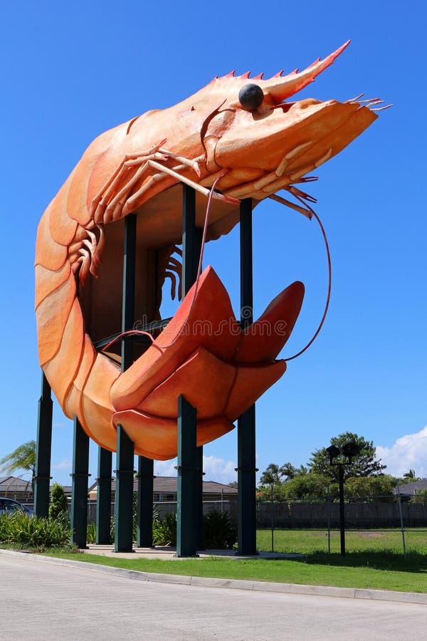 Il grande gamberetto, Ballina NSW, Australia fotografia stock