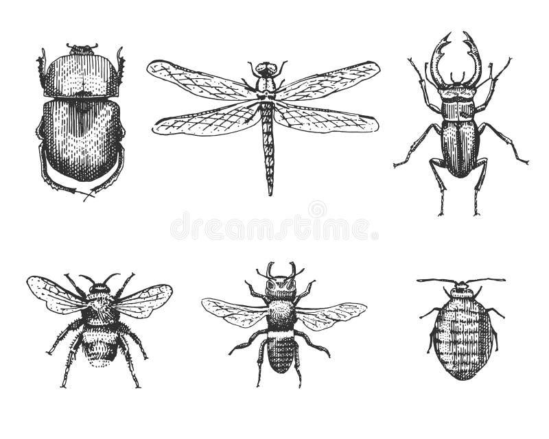 Il grande insieme degli scarabei e delle api degli insetti degli insetti molte specie nel vecchio stile disegnato a mano d'annata royalty illustrazione gratis