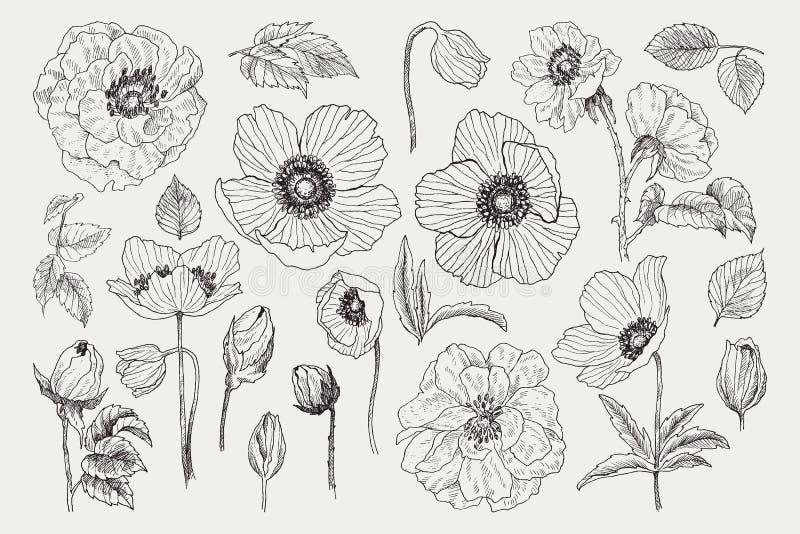 Il grande insieme dell'annata monocromatica fiorisce gli elementi di vettore, rose selvatiche del fiore dell'illustrazione elegan illustrazione di stock