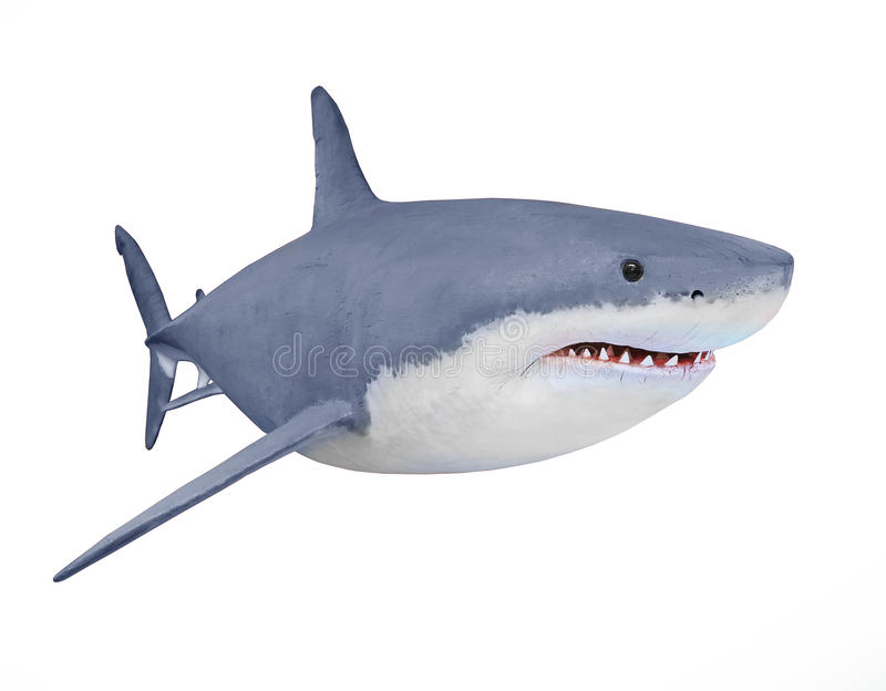 Il grande squalo bianco fotografie stock
