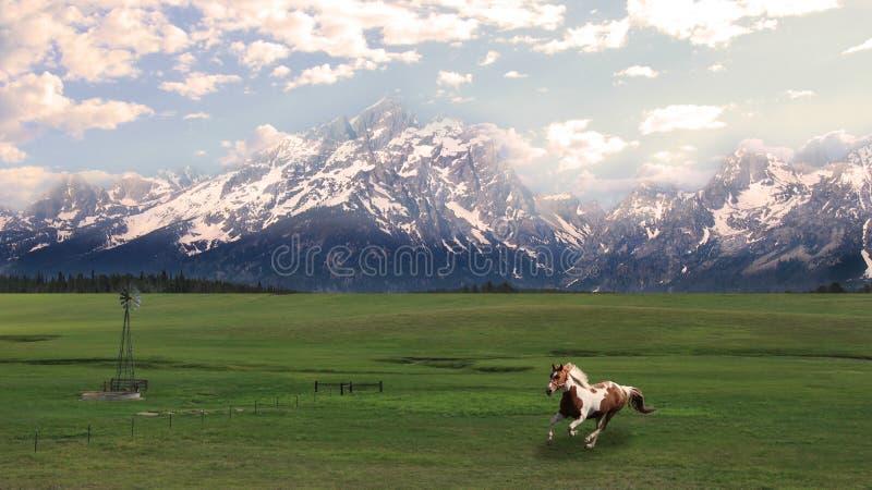 Il grande Tetons con il cavallo galoppante immagine stock