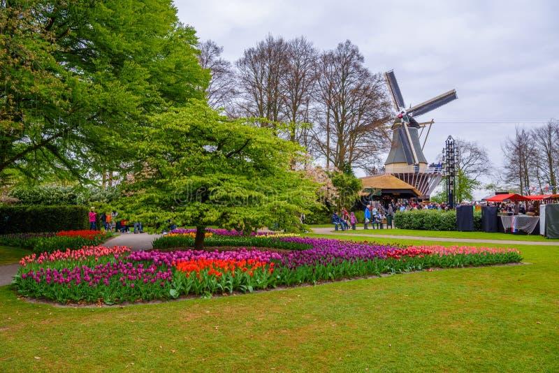 Il grandi retro mulino a vento e tulipani di pietra in Keukenhof parcheggiano, Lisse, Olanda, Paesi Bassi fotografia stock