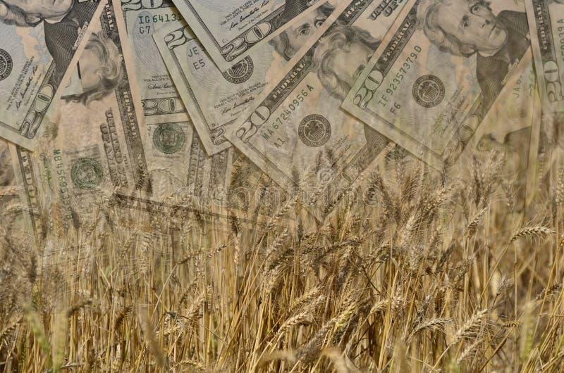Il grano ed i dollari americani o i soldi o la valuta nel colpo della doppia esposizione, dimostrando i guadagni o spendono nell' immagine stock libera da diritti