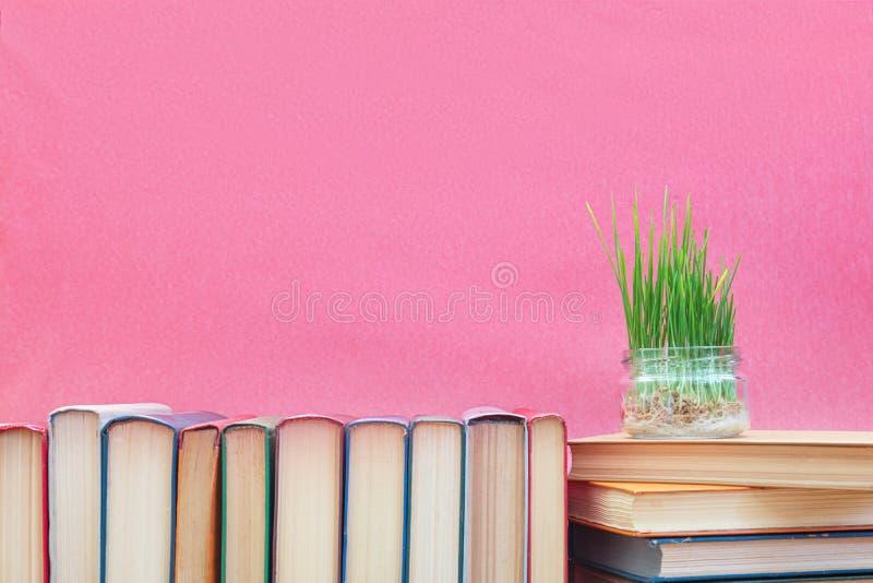 Il grano verde fresco germoglia in barattolo di vetro sui libri al rosa immagini stock