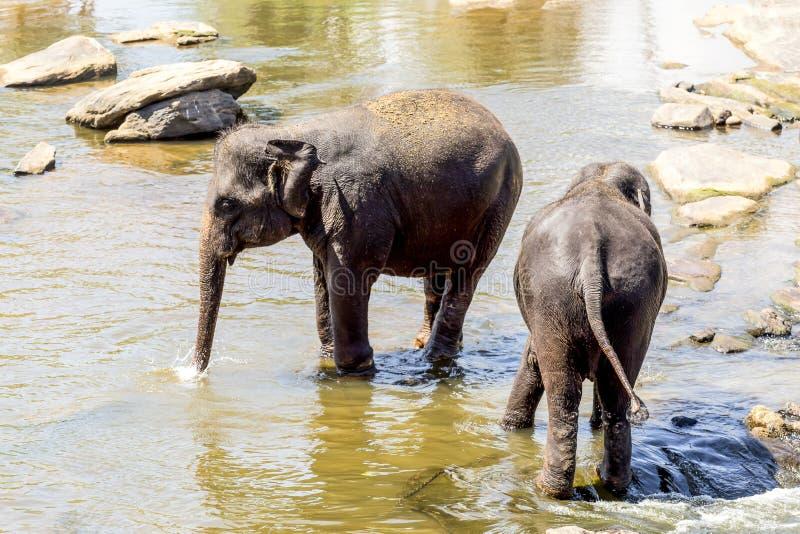 Il gregge degli elefanti fotografia stock libera da diritti