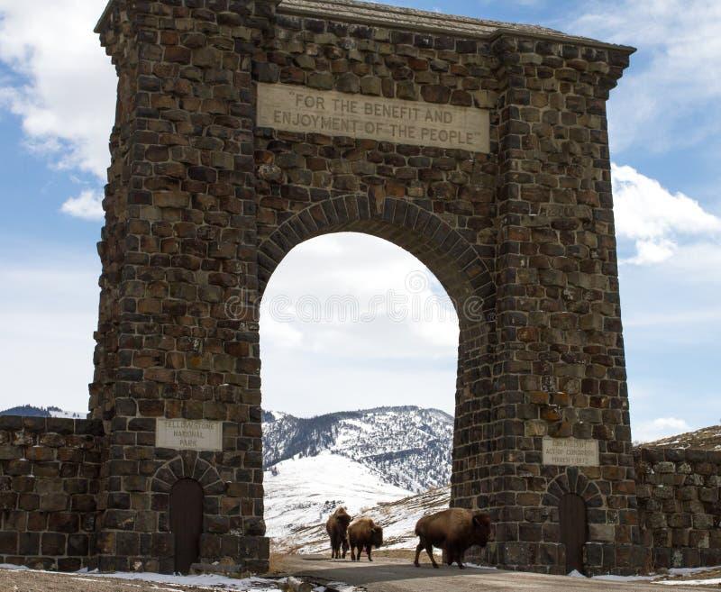 Il gregge del bisonte migra attraverso l'arco dell'ingresso fotografia stock libera da diritti