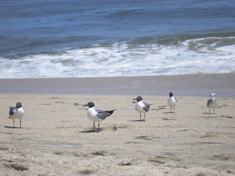 Download Il gruppo è tutto qui. fotografia stock. Immagine di sabbia - 200822