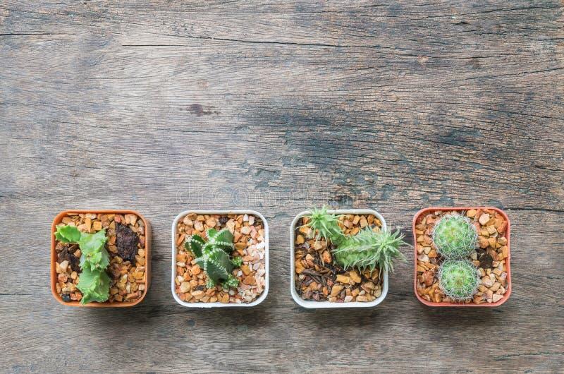 Il gruppo del primo piano di cactus in vaso bianco e marrone di plastica sullo scrittorio di legno ha strutturato il fondo nella  immagine stock