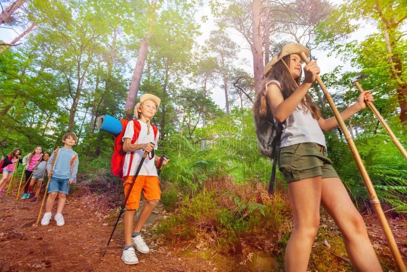 Il gruppo di bambini dell'esploratore cammina nella foresta fotografie stock