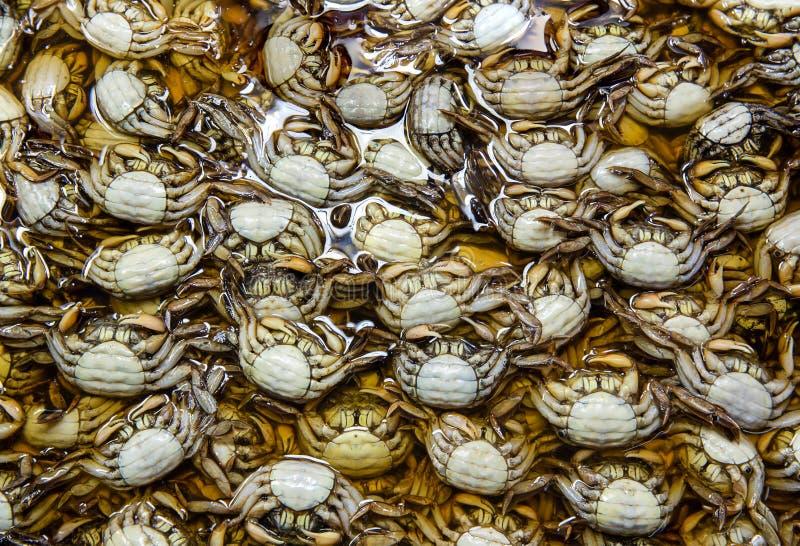 Il gruppo di granchio Salted o di granchio marinato Molti piccoli granchi d'acqua dolce crudi neri freschi nel mercato Granchio s fotografia stock