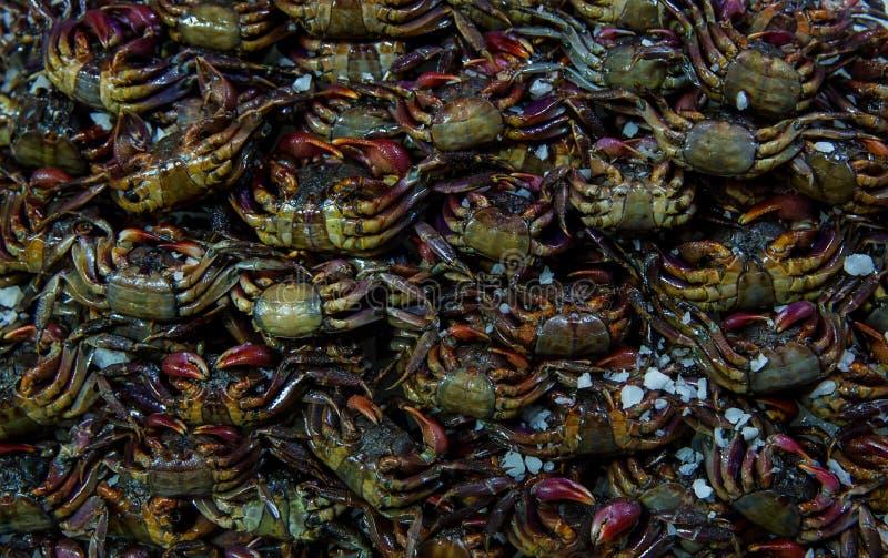 Il gruppo di granchio Salted o di granchio marinato Molti piccoli granchi d'acqua dolce crudi neri freschi nel mercato Granchio s fotografia stock libera da diritti