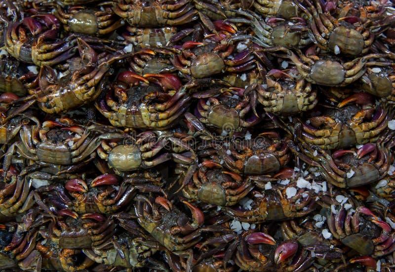 Il gruppo di granchio Salted o di granchio marinato Molti piccoli granchi d'acqua dolce crudi neri freschi nel mercato Granchio s immagini stock libere da diritti
