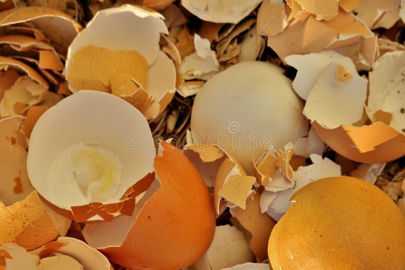 Il guscio d'uovo rotto dopo le uova si chiude su fotografia stock