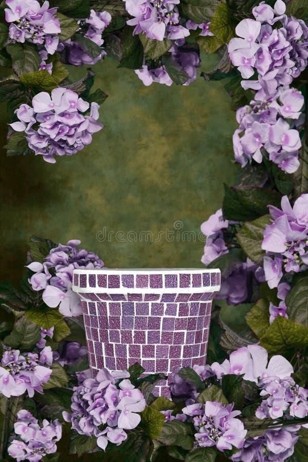 Il Hydrangea verde e viola della priorità bassa fiorisce la priorità bassa fotografie stock