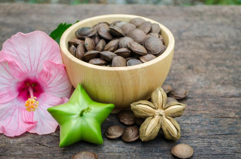 Il inchi di Sacha, semi ha proprietà medicinali immagine stock libera da diritti