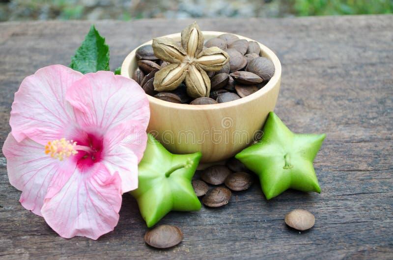 Il inchi di Sacha, semi ha proprietà medicinali fotografie stock