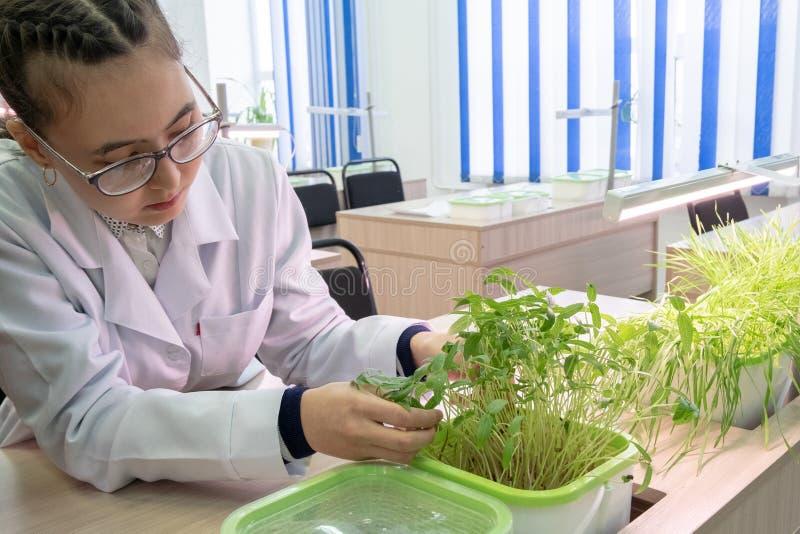 2019-09-01, il Kazakistan, Kostanay hydroponics Laboratorio della scuola La scolara nelle camice parla delle lenticchie crescenti fotografia stock