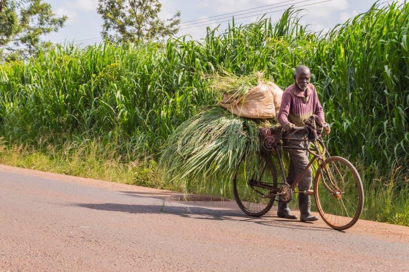 IL KENYA, THIKA - 28 DECEMBRE 2018: Trasporto keniano anziano dell'agricoltore immagini stock libere da diritti