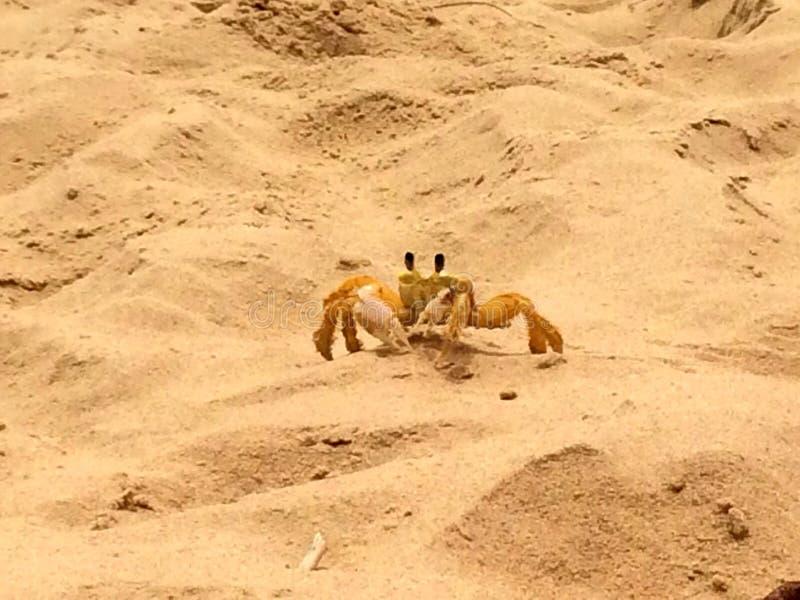 Il krab krusty reale fotografie stock libere da diritti