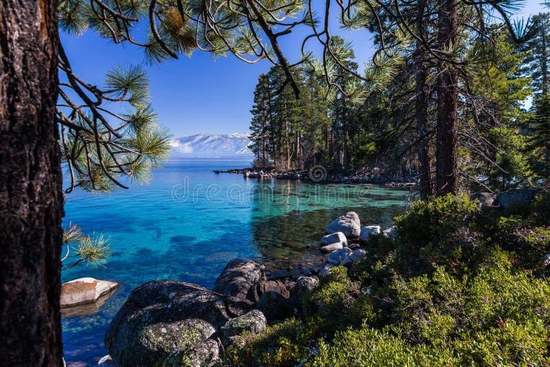 Il ` la s chiaro, turchese di Tahoe innaffia il ` s del surrounTahoe chiaro, le acque del turchese circondate dall'abetaia aded d immagine stock