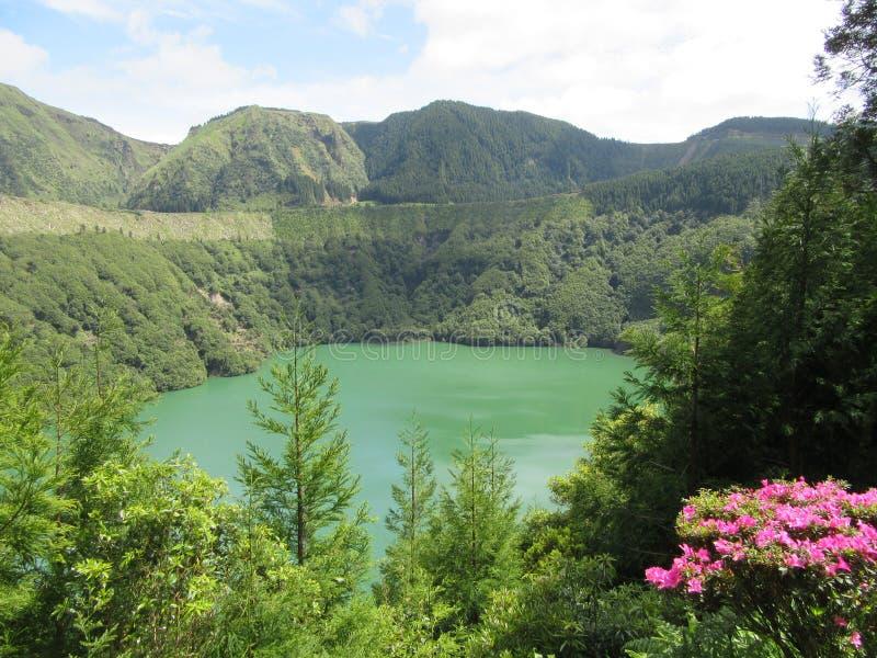 Il lago della montagna con i fiori rosa sui pendii immagini stock