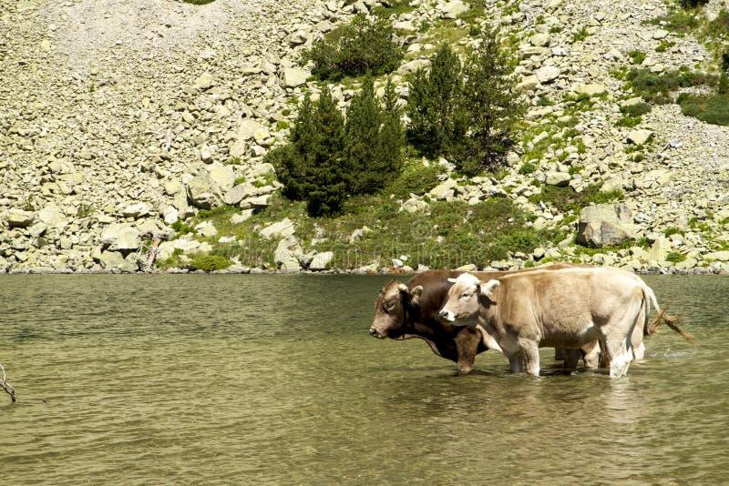 Il lago intimorisce il giorno che si raffredda ad agosto fotografie stock