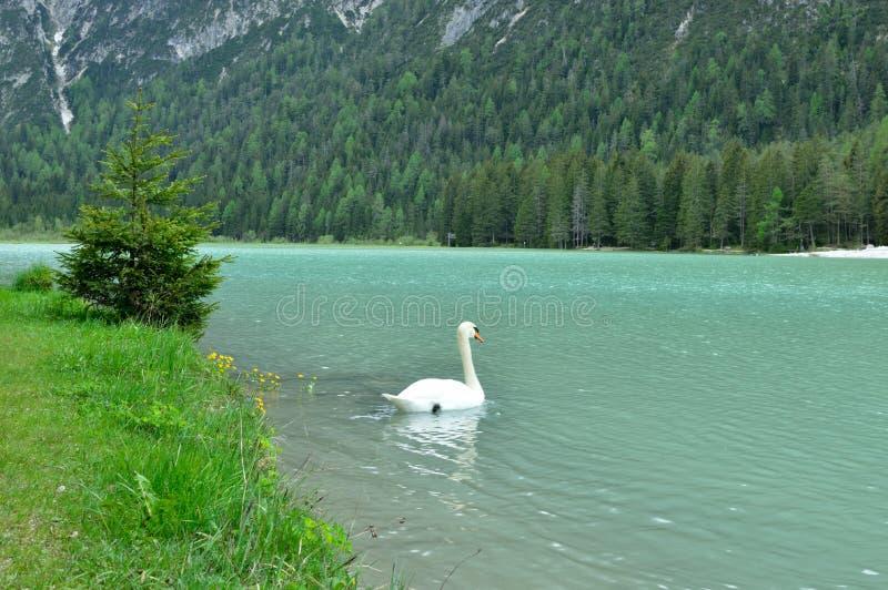 Il lago meraviglioso Braies nelle dolomia in primavera con le montagne ancora coperte in neve fotografia stock libera da diritti