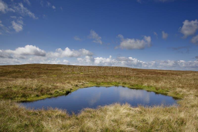 Il lago sul cinghiale è caduto fotografie stock libere da diritti