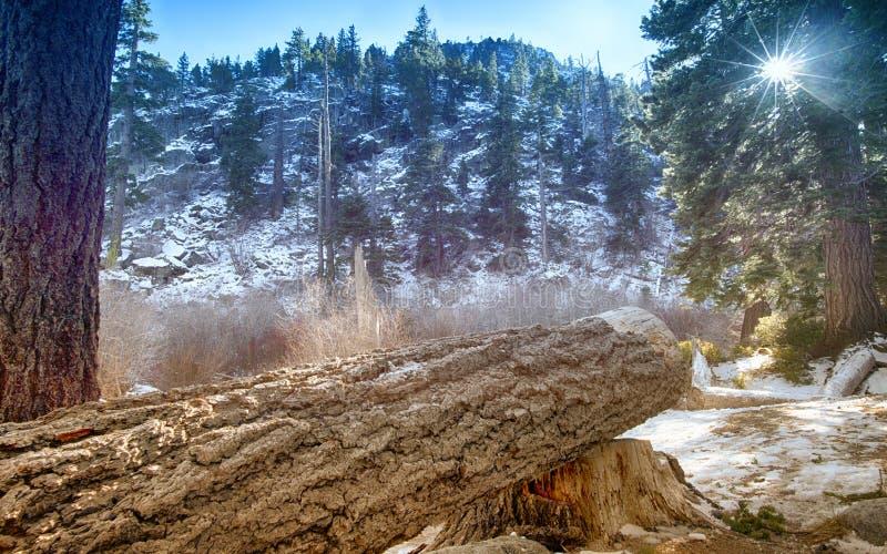 Il lago Tahoe Forrest fotografie stock