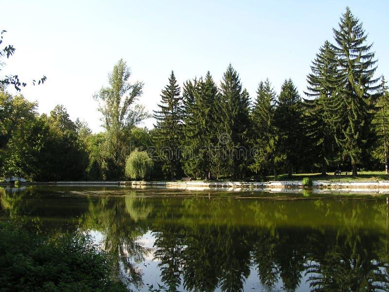 Il lago in un'abetaia fotografie stock