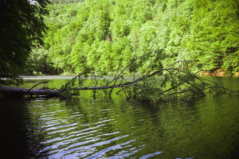 Il lago verde di Hamori in Lillafure vicino a Miskolc, Ungheria Paesaggio della primavera con i raggi di sole che coprono le mont fotografia stock libera da diritti